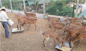 Đồng Nai: HTX chăn nuôi hươu, nai Hiếu Liêm làm giàu cho nông dân