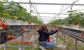 Nông nghiệp công nghệ cao- Bệ phóng cho các HTX phát triển