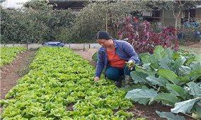 Điện Biên: Sản xuất nông sản sạch, hướng tới nền nông nghiệp bền vững