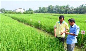 Long An: Tập trung sản xuất lúa chất lượng cao