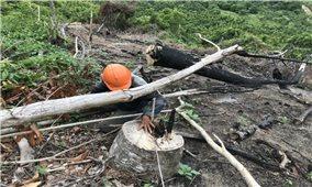 Khánh Hòa: Bao giờ rừng được bình yên?