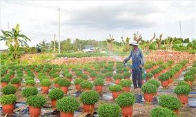 Tây Nam Bộ: Nhà vườn lo ngại đầu tư cho sản phẩm phục vụ Tết