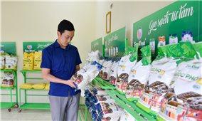 Liên kết sản xuất giữa nông dân và doanh nghiệp: Nâng cao giá trị hạt gạo xứ Thanh