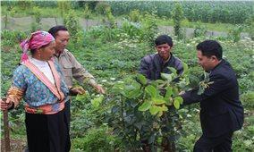 Hiệu quả từ việc nâng cao năng lực cho cán bộ cơ sở ở Lào Cai