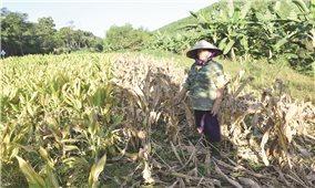 Miền núi Nghệ An: Bao giờ người dân mới thoát khỏi nỗi lo thiếu nước?