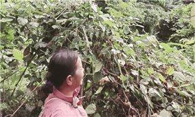 Chiêm Hóa (Tuyên Quang): Đất đang tranh chấp vẫn được cấp sổ đỏ