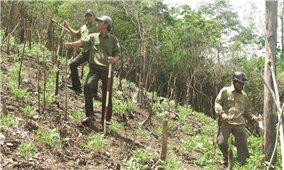 Phú Yên: Giải quyết tồn tại để phát triển rừng bền vững