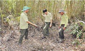 Đồng bằng sông Cửu Long: Cảnh báo cháy rừng khi mùa khô kéo dài