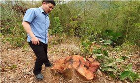 """Hạt kiểm lâm Bá Thước (Thanh Hóa): Báo cáo """"sót"""" nhiều cây gỗ quý hiếm bị chặt hạ trái phép?"""