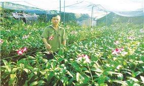 Ngân hàng CSXH TP. Hồ Chí Minh: Điểm tựa cho người nghèo trên hành trình phát triển