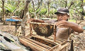 Tín dụng chính sách ở huyện Quảng Ninh (Quảng Bình): Hỗ trợ hộ vừa thoát nghèo phát triển bền vững