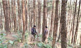 Ứng dụng hồ sơ điện tử vào quản lý nguồn gốc gỗ