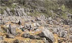Canh tác trên đá