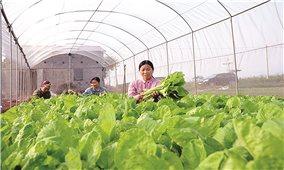 Nông nghiệp Thủ đô và những giải pháp trong mùa dịch Covid-19