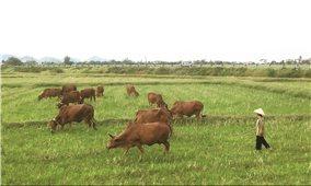 """Chính sách miễn, giảm thuế sử dụng đất nông nghiệp: Cần có giải pháp để bịt """"lỗ hổng"""""""