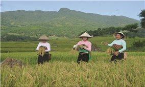Đồng bào các dân tộc ở Thanh Hóa khắc sâu lời Bác dạy