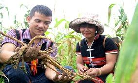 Giảm nghèo ở Tây Giang