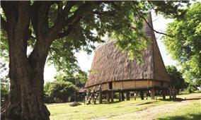 Di sản xanh ở buôn làng Tây Nguyên