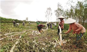 Cơ giới hóa trong lĩnh vực nông nghiệp: Cần sự đồng bộ