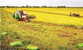 Bảo tàng Nông nghiệp tại Vĩnh Long: Địa chỉ bảo tồn nền văn hóa nông nghiệp vùng ĐBSCL