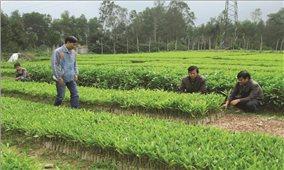 Khánh Vĩnh (Khánh Hòa): Hướng đến phát triển lâm nghiệp bền vững