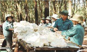 Đưa công nghệ vào sản xuất nông nghiệp tại Bình Phước: Hướng phát triển bền vững