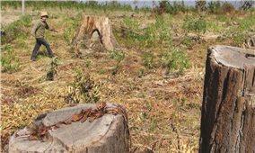 Quản lý đất nông, lâm trường còn nhiều bất cập