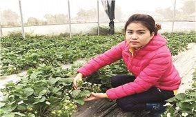 Cô gái Tày có doanh thu 2 tỷ đồng từ nông nghiệp