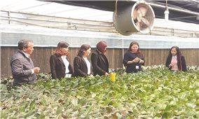 Huyện Đan Phượng (Hà Nội): Nâng chất nông thôn mới từ sản phẩm OCOP