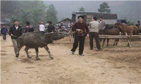 Một ngày ở chợ gia súc Nghiên Loan