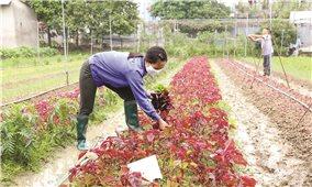 Nông nghiệp hữu cơ: Bước đột phá trong sản xuất hàng hóa