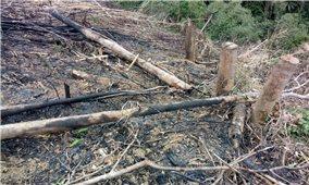 """Nghệ An: """"Nóng"""" tình trạng phá rừng"""