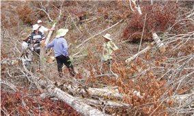 Huyện Đồng Xuân (Phú Yên): Nhiều đối tượng ồ ạt phá rừng chiếm đất