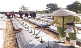 Hợp tác xã ở Đam Rông (Lâm Đồng): Giải quyết tốt việc làm cho lao động nông thôn