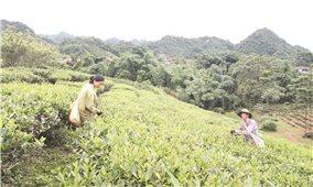Chương trình 135 ở Sơn La: Mang lại nhiều khởi sắc cho các xã đặc biệt khó khăn