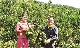 Lào Cai: Nâng cao giá trị kinh tế từ sản xuất chuyên canh
