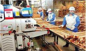 Tuyên Quang: Định hướng phát triển lâm nghiệp bền vững