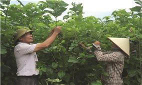 Nỗ lực giảm nghèo: Nhìn từ tỉnh miền núi Lào Cai