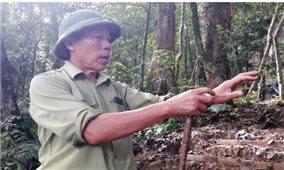 Lão nông ở bản Vịn hơn 20 năm giữ rừng