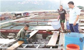 Quỳnh Nhai (Sơn La): Triển vọng làm giàu  từ nuôi cá lồng