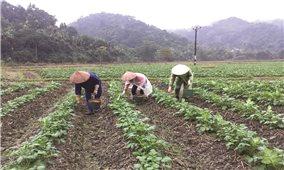 Nâng cao thu nhập từ trồng rau an toàn