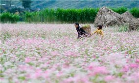 Nhiều hoạt động đặc sắc tại Lễ hội hoa Tam giác mạch tỉnh Hà Giang năm 2020