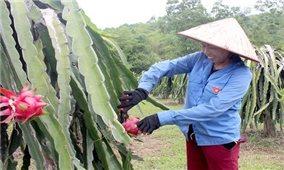 Phú Thọ: Nông dân làm giàu từ phát triển mô hình nông nghiệp
