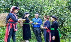 Tuyên Quang: Đột phá trong phát triển nông nghiệp hàng hóa