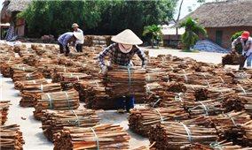 Yên Bái: Tháo gỡ khó khăn cho hợp tác xã nông nghiệp
