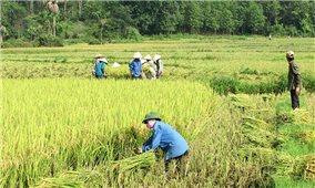 Hà Giang: Hiệu quả từ các mô hình kinh tế tập thể