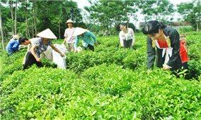 Chương trình 135 ở Thái Nguyên: Điểm sáng trong công tác giảm nghèo