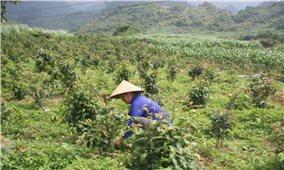 Phương hướng phát triển sản xuất, giảm nghèo bền vững cho vùng DTTS và miền núi