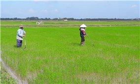 Bộ Nông nghiệp và phát triển nông thôn: Tạo sinh kế tạm thời cho người dân miền Trung sau mưa lũ