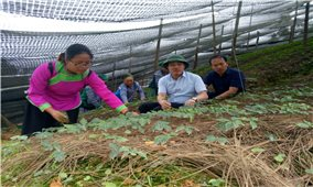 Đánh thức tiềm năng đất đai từ trồng cây dược liệu